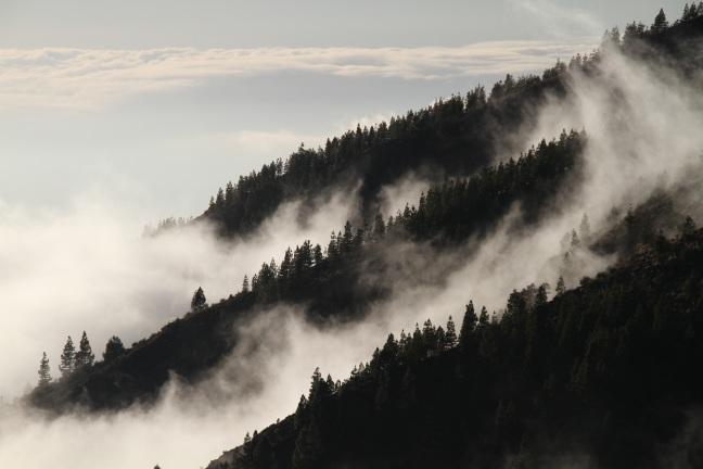 fog-1220491